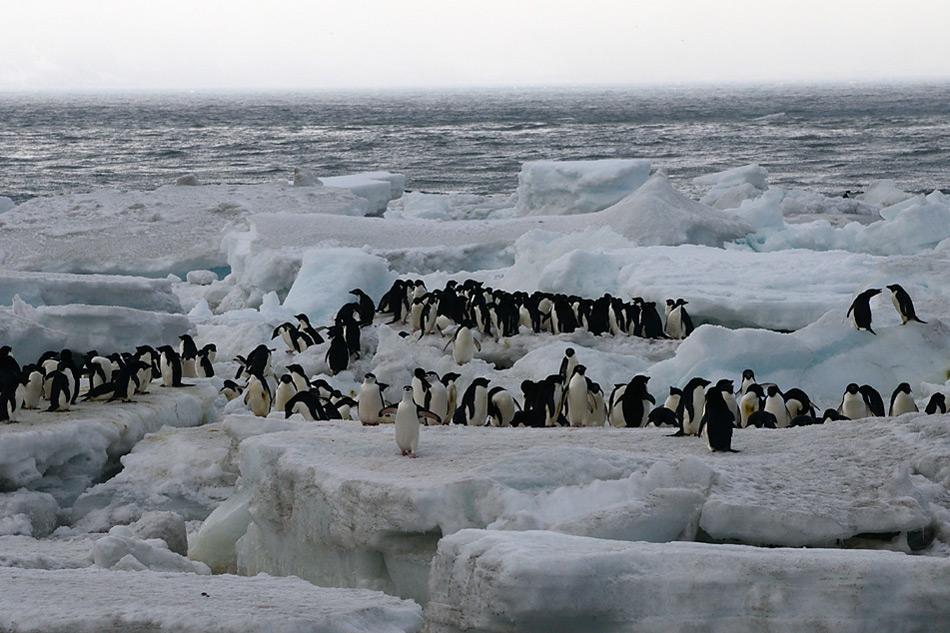001 Pinguine auf Saunders Island