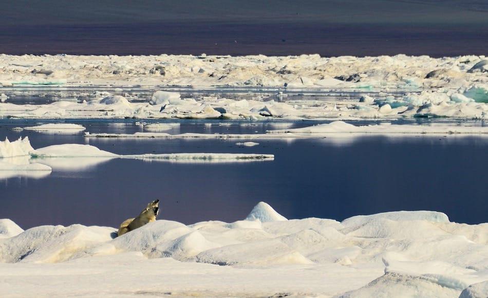Das Packeis im Arktischen Ozean ist ein echter Lebensraum für eine Vielzahl von Tieren und Algen. An der Basis steht immer das pflanzliche Plankton, dessen Wachstum von vor allem von Nährstoffen abhängig ist. Bild: Michael Wenger
